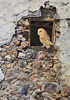 """Barn Owl Painting Picture A NEW HOME ACRYLIC ON CANVAS 18"""" X 24"""" by Alan M Hunt. Birds of Prey Paintings, Artwork, Fine Art, Bird of Prey Paintings, Bird Paintings, Ghost, Silent Predator, Wildlife Paintings, Wildlife Art, Bird Paintings, Painting Prints, Art Prints, Acrylic Painting Inspiration, Owl Canvas, British Wildlife, Photorealism"""