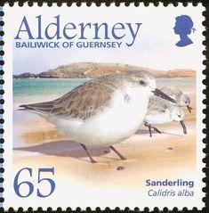 Sanderling stamps - mainly images - gallery format