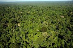 """RIO DE JANEIRO: Brazilian authorities have admitted that the Amazon's Awa, """"Earth's most threatened tribe,"""" are outnumbered 10 to one in just one of their reserves, Survival International said Thursday.    Survival International, a leading advocate for ..."""
