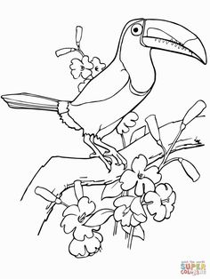 Free Rainforest Coloring Pages