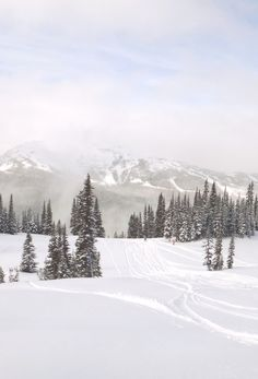 northernist:  fresh morning, by northernist. taken on blackcomb mountain.