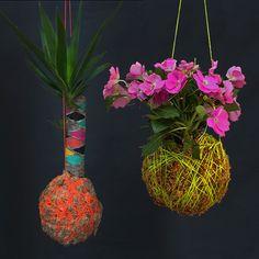 hmmm tempted to paint our yucca. Hanging Flower Pots, Hanging Plants, Indoor Plants, Indoor Gardening, String Garden, Moss Garden, House Plants, Greenery, Flora