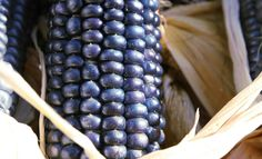 This beautiful corn comes from the Hopi who used it as a primary food source. It is typically used as flour and makes lovely tortillas. Like most flour type corn this corn can be eaten off the cob for a short time before reaching full maturity. Cornmeal Polenta, Flint Corn, Popcorn Seeds, Yellow Cornmeal, The Husk, American Food, Native American, Sweet Corn, Health Care