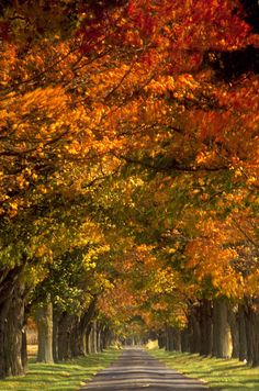 There is a harmony in autumn, and a luster in its sky, which through the summer…