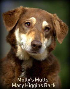 Mary Higgins Bark - Doberman Pinscher/Australian Shepherd Mix - Female - 6 yrs old -  Molly's Mutts Animal Rescue - Dixon, KY.  #3 #new #pinterest #dog #doglovers #love #like4like