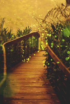 Firefly Bridge, Taiwan