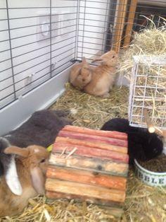 . Bunny, Cute Bunny, Rabbit, Rabbits, Baby Bunnies