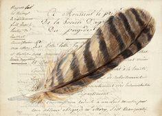 Owl Feather 1851 -Arte Postale by Mary Jo Koch