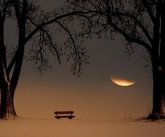 Tranquil moonlight spot to sit. So well-framed with the trees on either side.