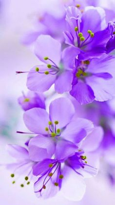 shared by 💜 I love Purple 💜 Exotic Flowers, Pretty Flowers, Colorful Flowers, Purple Flowers, Flower Backgrounds, Flower Wallpaper, Beautiful Flowers Wallpapers, Flower Pictures, Trees To Plant