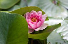 Lotus by Jürgen Barth on 500px