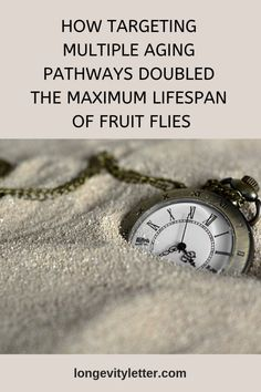 How targeting multiple aging pathways doubled the maximum lifespan of fruit flies Good Laboratory Practice, Theories Of Aging, Translational Medicine, Life Extension, Fruit Flies, Healthy Aging, Live Long, Pathways, Anti Aging