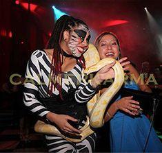 Zebra snake walkabout act  Hint of Zoo themed entertainment to hire across the UK inc Manchester, London, Birmingham, Brighton and Wales. www.calmerkarma.co.uk Tel:  020 3602 9540