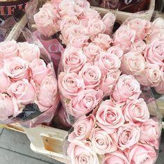pink roses ♥✫✫❤️ *•. ❁.•*❥●♆● ❁ ڿڰۣ❁ La-la-la Bonne vie ♡❃∘✤ ॐ♥⭐▾๑ ♡༺✿ ♡·✳︎·❀‿ ❀♥❃ ~*~ TH May 5th, 2016 ✨ ✤ॐ ✧⚜✧ ❦♥⭐♢∘❃♦♡❊ ~*~ Have a Nice Day ❊ღ༺ ✿♡♥♫~*~ ♪ ♥❁●♆●✫✫ ஜℓvஜ
