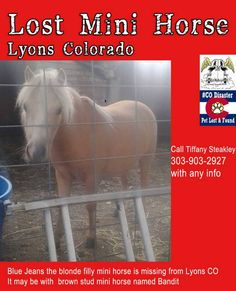 #COFlood Lost #Horses Blond Filly is missing from Lyons CO.. it may be with a brown mini horse. Please share #COPets