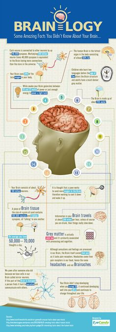 Brainology 15 Intriguing Facts About Your Brain [Infographic] is part of Science Facts Neuroscience - This brainology infographic will give you 15 facts that you probably didn't know about your brain They might increase the creativity of your imagination Some Amazing Facts, Interesting Facts About Humans, Awesome Facts, Fascinating Facts, Brain Facts, Facts About The Brain, Brain Science, Brain Food, Science Education