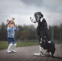 """Visit our site for more info on """"great dane puppies"""". It is an exceptional area to find out more. Dogs And Kids, Big Dogs, Animals For Kids, I Love Dogs, Cute Dogs, Cute Animals, Dane Puppies, Great Dane Puppy, Dorian Gray"""