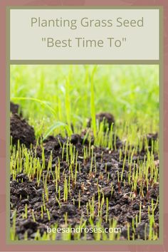 How deep should you prepare the soil when planting grass seed? And what is the best way to prepare the soil? Is it important to level the ground before planting? (Yes, but not for the reasons you might think!) Grass seed planting made easy! Fall Lawn Care, Lawn Care Tips, Planting Grass Seed, Planting Seeds, Full Sun Landscaping, Landscaping Ideas, Best Grass Seed, Lawn Striping, Organic Lawn Care