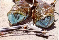 Sleeping Ling cods