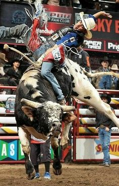 Get ready, Las Vegas! Cowboy Spring Break is coming to The Strip May The Professional Bull Riders (PBR), the world's premier bull riding circuit, has Cowboy Girl, Cowboy Up, Bucking Bulls, Professional Bull Riders, Rodeo Cowboys, Bull Riding, Cattle, 8 Seconds, Memorial Day