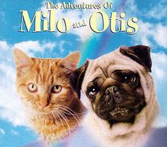 I named my cat & dog after this movie when I was little. :)