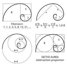 fibonacci golden section golden spiral golden ratio Cultural Architecture, Sacred Architecture, Proportion Architecture, Geometric Drawing, Geometric Art, Fibonacci Golden Ratio, Golden Ratio Spiral, Fibonacci Spiral Tattoo, Sacred Geometry Symbols
