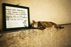Gatti di Lipari | Flickr: Intercambio de fotos
