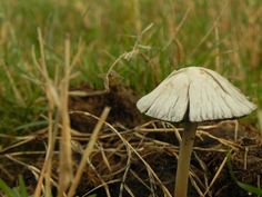 Llovió. Cuánto esperamos! Los hongos también han esperado el agua y ahora lucen por todo el campo en mil formas y tamaños