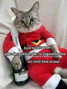 Animals And Pets, Humor, Memes, Funny, Happy, Funny Cats, Pictures, Bonjour, Funny Pics