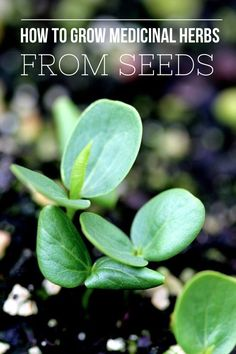 All about growing medicinal herbs from seeds from Blog Castanea