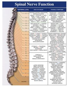 Chiropractic, Back Pain, and the Nerve System – A Philosophy of Health Corps Yoga, Spine Health, Medical Anatomy, Muscle Anatomy, Spinal Cord Injury, Chiropractic Care, Chiropractic Center, Chiropractic Office, Anatomy And Physiology