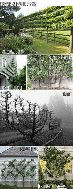 Landscape tree design – Espalier – you can do this with fruit trees (dwarf)! Fruit Garden, Garden Trees, Edible Garden, Garden Plants, Flowers Garden, Unique Gardens, Beautiful Gardens, Espalier Fruit Trees, The Secret Garden