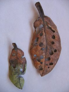 """Leaves in artists collection.  NOTE:  Life sized: Liz McAuliffe's work is grounded in a reverence for nature. It is hard to believe that the New Zealand native had no formal training before she started carving in 2007. She is""""attracted to the plentiful, fertile shapes in nature"""" and uses a variety of woods and MDF board to carve replicas of seeds, leaves and pods."""