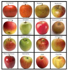 memorypommes Pre K Activities, Montessori Activities, Fruit And Veg, Fruits And Veggies, Tarte Fine, Apple Tea, Pomes, Book Study, Autumn Crafts