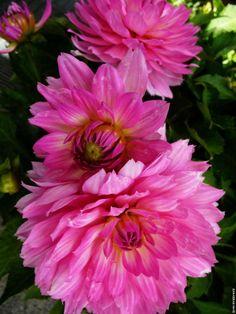 Flower 58 by Mohammad Azam