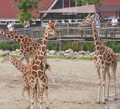 Diergaarde Blijdorp in Rotterdam is een van de oudste dierentuinen van Nederland.   The Netherlands http://nl.wikipedia.org/wiki/Diergaarde_Blijdorp