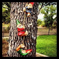 #gnomes - @wickedlightphoto- #webstagram