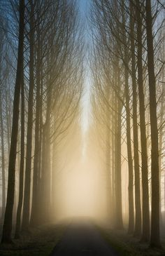 Misty Poplar Avenue by GethinThomas
