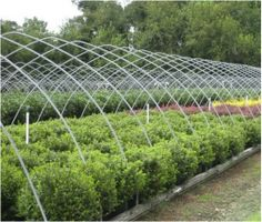 New Life Nursery-wholesale plant supplier Bridgeton NJ -Serving clients from New England and throughout the Mid-Atlantic States. www.facebook.com/newlifenurseryinc Call 856-455-3601 Wholesale Plant Nursery, Mid Atlantic States, Wholesale Plants, New Life, New England, Outdoor Structures, Facebook