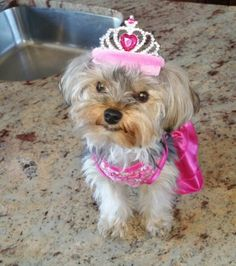 Yorkie Birthday Princess