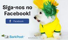 O Seu Cachorro Vai Esquecer Que Você Abraçou Ele Hoje - BarkPost Brasil