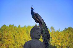Satyaprem, Fotos