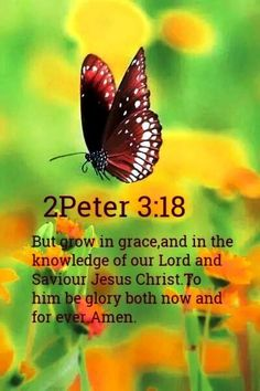 2 Peter But grow in grace, and in the knowledge of our Lord and Saviour Jesus Christ. To him be glory both now and for ever. Biblical Quotes, Bible Verses Quotes, Religious Quotes, Bible Scriptures, Devotional Quotes, Faith Bible, Spiritual Quotes, Christian Life, Christian Quotes