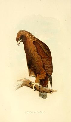 Some birds and mammals which destroy fish and game. - Biodiversity Heritage Library