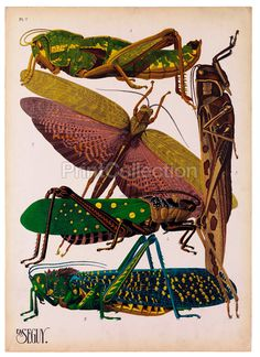 Insects, Plate 7