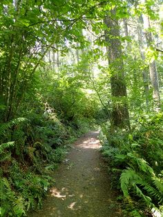 spencer butte wooded trail