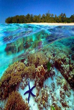 Great barrier reef, Australia. This is awesome and beautiful and I wouldn't want to touch anything.