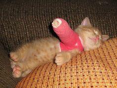 melt my heart :') kitten in a cast
