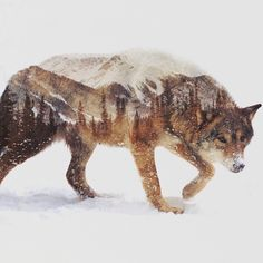 Norwegian artist Andreas Lie has perfectly captured the essence of the arctic in his latest double exposure photographs. Since the beginning, the artist has flawlessly merged animals and their rustic surroundings, but his newest works have a fresh quality to them. In focusing solely on wintry landscapes, Lie has added an element of pensiveness to his …
