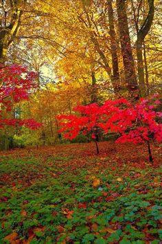 Autumn, Wallington Hall, Northumberland, England